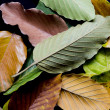 Leaves in decoration — Stock Photo