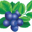 Stock Vector: Bilberry