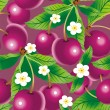 Cherry background — Stock Vector