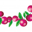Stock Vector: Cranberry