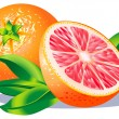 Grapefruit — Stock Vector
