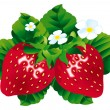 Strawberries - Stok Vektör