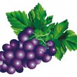 Stock Vector: Bunch of grapes