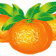 Tangerines — Stock Vector