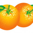 Royalty-Free Stock Vector Image: Oranges