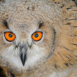 Stock Photo: Eyes from owl