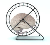 Human brain with arms and legs in hamster wheel — Stock Photo