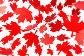 Canadian maple leafs autumn leaves — Stock Photo