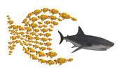 Fish group chasing shark — Stock Photo
