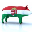 Hungarian pig with flag — Stock Photo #21811543