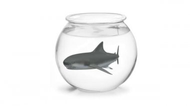 Fishbowl with shark inside 3d animation — Stock Video