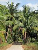Road through the palm grove — Stock Photo