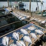 Drying fish on the pier fishing village — Stock Photo