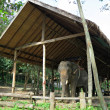 Elephant under a canopy — Stock Photo