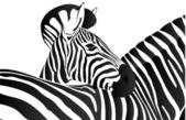 Animals in art — Stock Vector