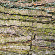Bark 2 — Stock Photo #23532333