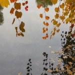 ������, ������: Autumn leaves