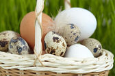 Eggs in a basket — Stock Photo
