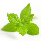 Fresh mint close up on white — Stock Photo