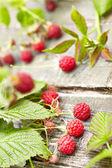 Wild raspberry — Stock Photo