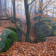 Stock Photo: Autumn in forest