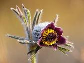 Spting цветок, крашеными. — Стоковое фото