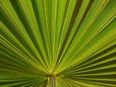 Palm leaf. — Stock Photo