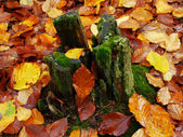 Stump in moss and autumn leaves. — Stock Photo