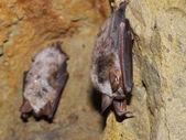 Bats family — Stock Photo