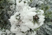Bevroren pine. — Stockfoto