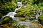 Waterfall in moss and ferns — Stock Photo