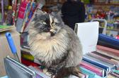 Kediler — Stok fotoğraf