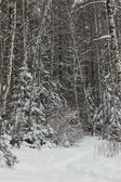 Winter forest after a snowfall — Fotografia Stock