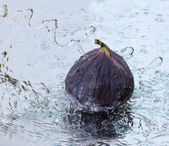 Figs in a jet of water — Stock Photo