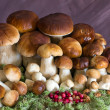 A large family of mushrooms — Stock Photo
