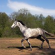 Silver Stallion in apple — Foto de stock #16935683