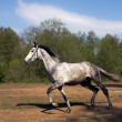 Silver Stallion in apple — Stockfoto #16935683