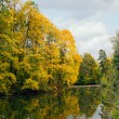 Yellow autumn maple over water — Stock Photo