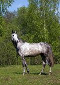 Carrinho, cavalo — Foto Stock