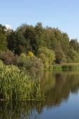 Ein teich im park pokrowskoje-streshnevo — Stockfoto