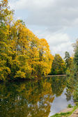 Yellow autumn maple over water — ストック写真