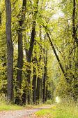 Herbst linden-gasse — Stockfoto