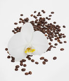 Flower on coffee beans — Fotografia Stock