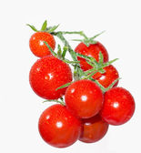Cherry tomatoes on a branch in the water droplets — Stock Photo