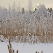 Stock Photo: Winter lake shore