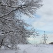 Winter forest edge - Stock Photo