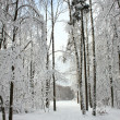 Winter forest after a snowfall - Stock Photo