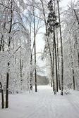 Winter forest after a snowfall — Stock Photo