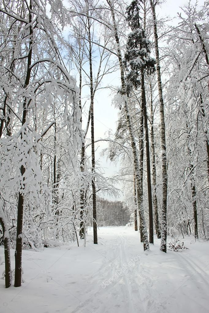 Beautiful winter Forest After