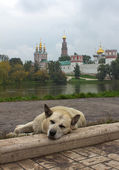 собака и монастырь — Стоковое фото